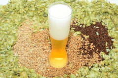 Cold pilsner beer. Pilsner glass with grains and hops Royalty Free Stock Photo