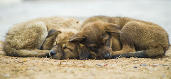 Cold Puppies Stock Photo