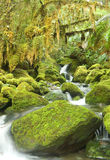 Cold Rainforest in New Zeland Stock Image