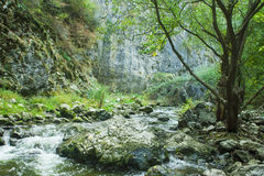 Cold river in mountains of Transylvania Royalty Free Stock Images