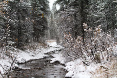Cold River in the Snow. A cold freshwater river in Denali National Park. Fresh snow rests on pine needles, shrubs, and the ground Stock Photo
