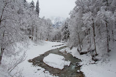 Cold river between trees near Partnach Gorge in winter time. Garmisch-Partenkirchen. Germany. Royalty Free Stock Photo