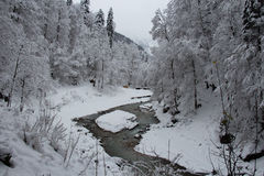 Cold river between trees near Partnach Gorge in winter time. Garmisch-Partenkirchen. Germany. Royalty Free Stock Image