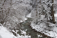 Cold river between trees in winter time. Garmisch-Partenkirchen. Germany. Royalty Free Stock Photography