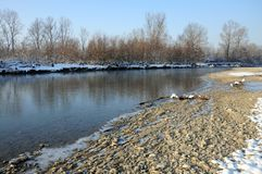 Cold river in winter sunny day Stock Image