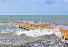 Cold sea and seagulls in October Stock Image