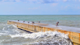 Cold sea and seagulls in October Royalty Free Stock Image