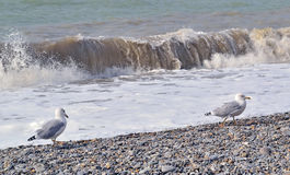 Cold sea and seagulls in October Stock Photography