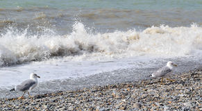 Cold sea and seagulls in October Stock Photo