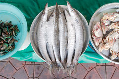 Cold seafood small raw fresh fish Stock Photography