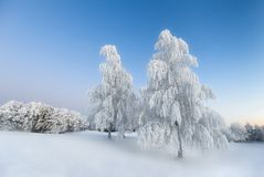 Cold and Silent Winter morning. Frosty Trees in norwegian Winter landscape stock images