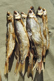 Cold-smoked whitefish Stock Images