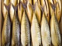 Cold smoking a mackerel Stock Photo