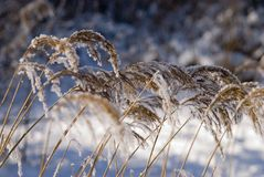 Cold and snow Royalty Free Stock Image