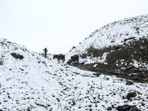 Cold snowy weather on way to Thorong La Pass, Nepal Royalty Free Stock Image