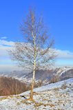 Cold solitude - tree with empty branches in winter Royalty Free Stock Photos