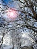 Cold Sun Between Snowy Branches Stock Photos