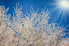 Cold sunny Christmas morning Royalty Free Stock Photos