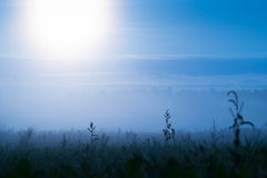 Cold sunrise over meadow Stock Photography