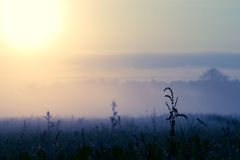 Cold sunrise over meadow2 Stock Photography