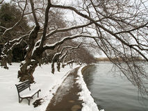 Cold Tidal Basin Stock Images