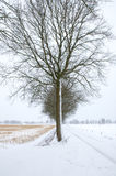 Cold tree royalty free stock photography