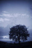 Cold Tree Stock Image