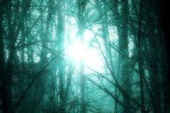 Cold Turquoise Forest Bright Surreal Sun stock photography