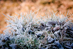 Cold and warm Royalty Free Stock Photo