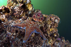 Cold Water Reef Royalty Free Stock Images
