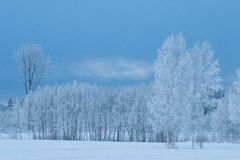 Cold weather in Estonia Royalty Free Stock Photos
