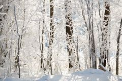 Cold weather. Frosty weather conditions. Trees with frost and snow, Winter background royalty free stock photos