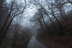 Road through forest and autumn fog royalty free stock photos