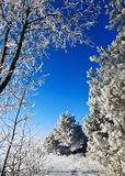 Cold weather Royalty Free Stock Photography