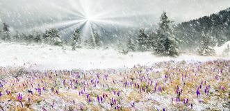 Cold and wind Royalty Free Stock Images
