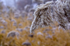 A cold winter. Frozen vegetation near a river in Zaragoza, Spain Royalty Free Stock Photos