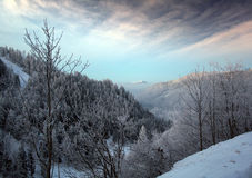 Cold Winter. Winter in the Black Forest in Germany Royalty Free Stock Photo