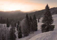 Cold Winter. Winter in the Black Forest in Germany Royalty Free Stock Images