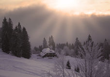 Cold Winter. Winter in the Black Forest in Germany Royalty Free Stock Photography