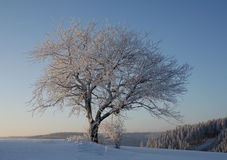 Cold Winter. Winter in the Black Forest in Germany Stock Photos