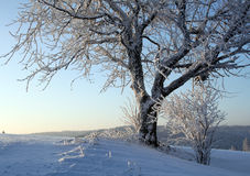 Cold Winter. Winter in the Black Forest in Germany Stock Photography