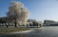Cold winter Royalty Free Stock Images