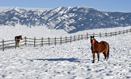 Cold winter in Bozeman. Bozeman, Montana (USA) in the winter is cold, often well below zero type of cold. Driving the side roads in 2009 we were captivated by Royalty Free Stock Images