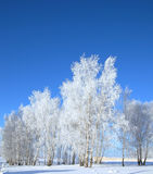 Cold winter day Royalty Free Stock Image