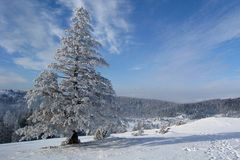 On a cold winter day Royalty Free Stock Image