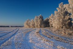 Cold winter day. With frosty trees Royalty Free Stock Photo