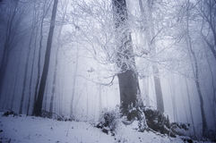 Cold winter day in a frosty forest near a large tr Stock Photo