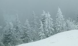 Heavy snow storm into the forest Royalty Free Stock Photo
