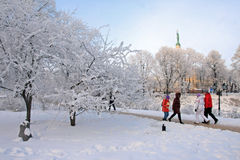 Cold winter day in the park Royalty Free Stock Photo