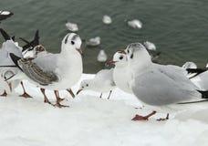 Meeting of seagulls ! royalty free stock photos